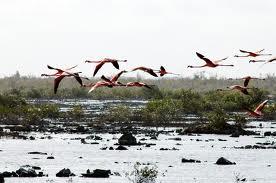 Yachtcharter Bahamas: Flamingos im Nationalpark Inagua