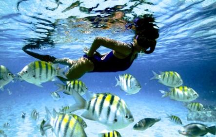 Charter Bahamas: Die Bahamas sind ein Schnorchelparadies par excellence