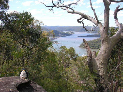 Bootscharter Sydney: Entlang des Cowan Creek trifft man auf viel unber�hrte Natur